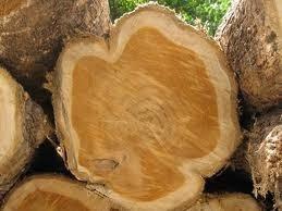 strom teak